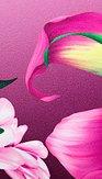 Šaty Spev pivoniek, ružové
